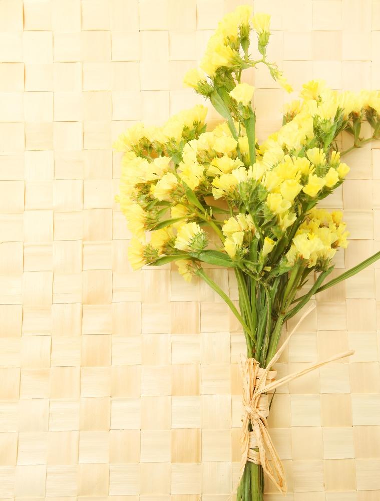 Yellow statice seeds limonium sinuatum 105 seeds garden seeds yellow statice seeds limonium sinuatum 105 seeds mightylinksfo