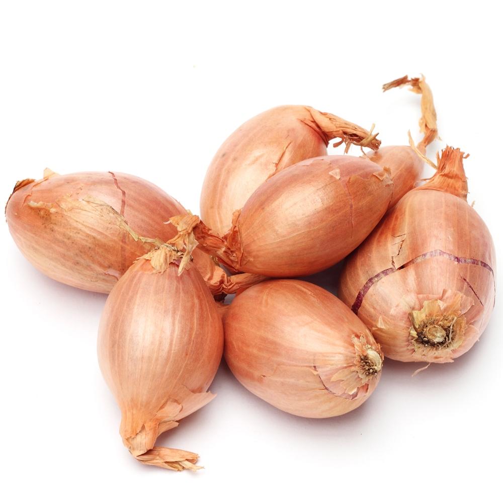 onion   plant   Britannica.com