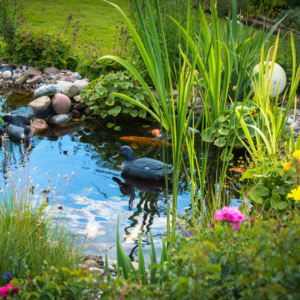 Plants to grow around ponds mix garden seeds market for Plants around ponds