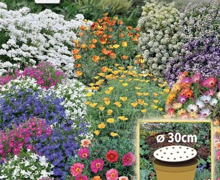 Flowery Carpet - dwarf annual flowers' mix - a 30-cm-wide seed disc