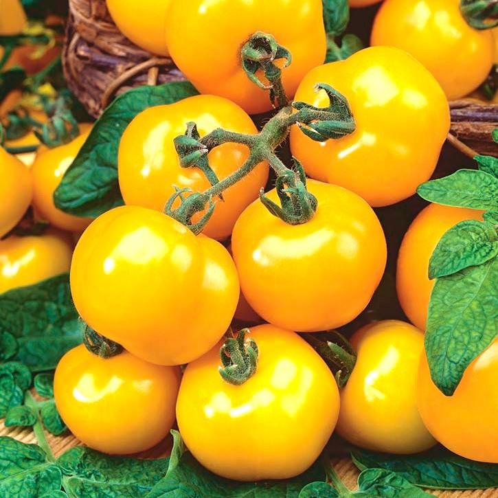 томаты ромус отзывы и фото печати