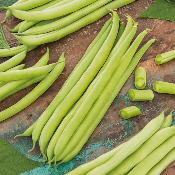 "green French bean /""Oxinel/"" Dwarf"