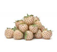 Truskawka biała ananasowa sadzonki