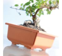 Doniczka do bonsai Dbon - 20 x 14 cm - terakota