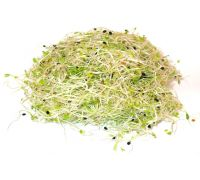 Nasiona na kiełki - cebula