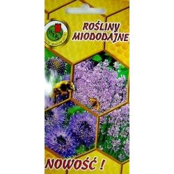 Honey Plants - Sheep's Bit and English Lavender