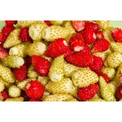 Fresa salvaje - Yellow Wonder - 320 semillas - Fragaria vesca