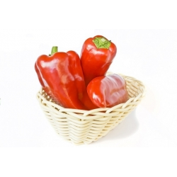 Piment Rouge - Rokita - 68 graines - Capsicum L.