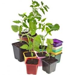 Pot pembibitan hijau berukuran 8 x 8 cm - 20 buah -