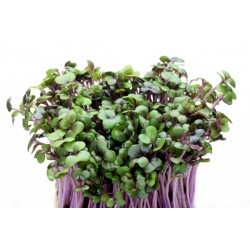 Peakapsas -  punane - Brassica oleracea,convar. capitata,var. rubra. - seemned