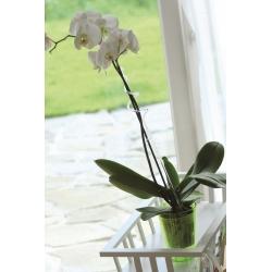 Orhideede hoidja - roheline -
