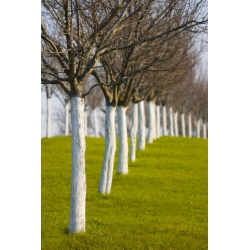 Lime for trees and shrubs - 1 kg