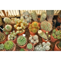 Cactus and succulent soil - 5 litres