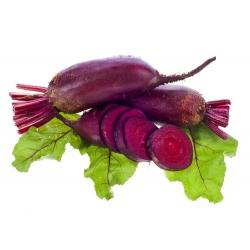 Свёкла - Opolski - 500 семена - Beta vulgaris