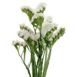 White Statice seeds - Limonium sinuatum - 105 seeds