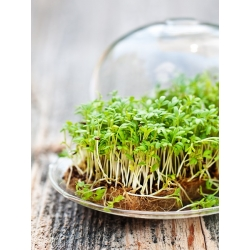 Bittercress - giant package 500 g - 225000 seeds