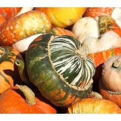 Turban Squash seeds - Cucurbita maxima - 20 seeds