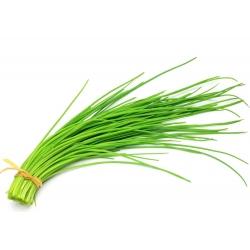 الثوم المعمر بذور Jowisz - الآليوم schoenoprasum - 850 البذور - Allium schoenoprasum L. - ابذرة