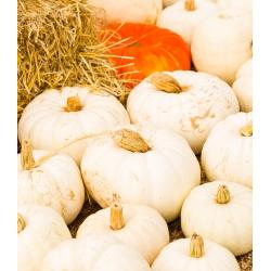 Тыквы декоративной - Baby Boo - 33 семена - Cucurbita pepo