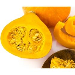 Pumpkin Justynka seeds - Cucurbita maxima - 28 seeds
