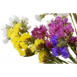 मिश्रित बीज statice - घंटी drabifolia - 105 बीज -