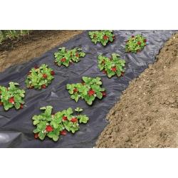 Perforált eper talajtakaró fólia - 1,4 mx 10 m -