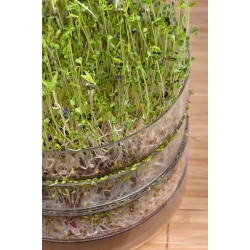 Growing sprouts - Sprout growing container - Sprouter with 2 trays