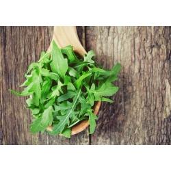 بيو روكيت - بذور عضوية معتمدة - 800 بذرة - Eruca vesicaria - ابذرة
