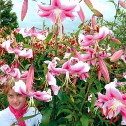 Strom Lily Lilium Anastasia - žiarovka / hľuza / koreň