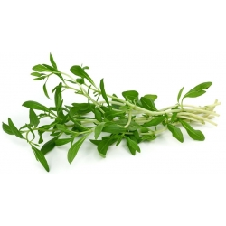 Насіння літніх чабер - Satureja hortensis - 2600 насіння