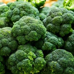 Broccoli Cezar seeds - Brassica oleracea convar botrytis - 600 seeds