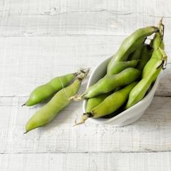 Broad Bean Crimson seeds - Vicia faba
