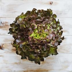 Lettuce Red Salad Bowl seeds - Lactuca sativa - 1150 seeds