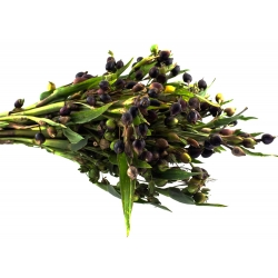 Семена слез Иова - Coix lacryma-jobi - 15 семян - семена