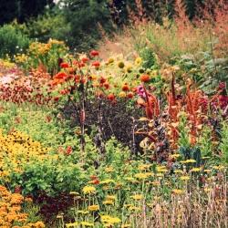 Orange Plants mixed seeds