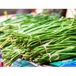Cowpea seeds - Vigna sinensis - 60 seeds