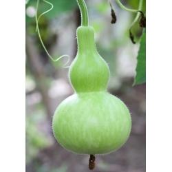 Лагенария обыкновенная - Birdhouse - 7 семена - Lagenaria siceraria