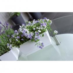 Vaso retangular com pires - Coubi - 24 x 12 cm - Creme -