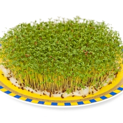 Cress Sprouts - 4500 seeds