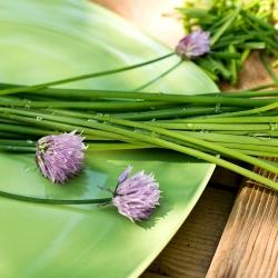 Лук скорода - Medium leaf - 1700 семена - Allium schoenoprasum L.