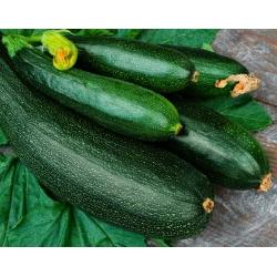 Zucchini Soraya seeds - Cucurbita pepo - 20 seeds