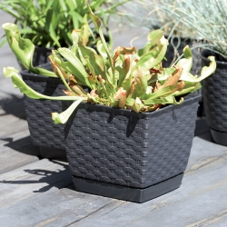 Square flower pot with saucer - Ratolla - 24 cm - Mocca