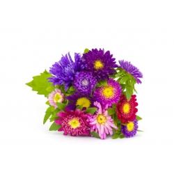 Астры - сортовая смесь для срезанных цветов - 500 семян - Callistephus chinensis - семена