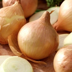 Cebula sałatkowa Globo nasiona