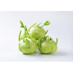 """Kohlrabi ، اللفت الألماني """"فيينا الأبيض"""" - 260 بذور - Brassica oleracea var. Gongylodes L. - ابذرة"""