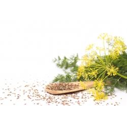 Aedtill - Superducat - 2800 seemned - Anethum graveolens L.