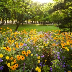 Annual Plants for a Cut Flower mixed seeds - 60 seeds