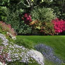 Annual Rockery Plant mix seeds - 25 seeds