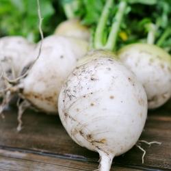 Турнепс - Snowball - 2500 семена - Brassica rapa subsp. Rapa