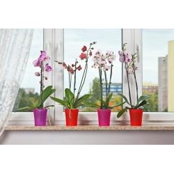 Горшок для орхидеи - Орхидея - 12,5 см - Прозрачный розовый -